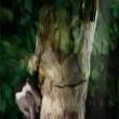 Hömötiainen - Parus montanus