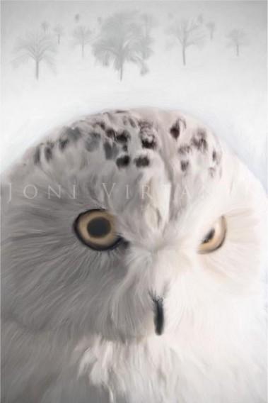 Tunturipöllö - Nyctea scandiaca