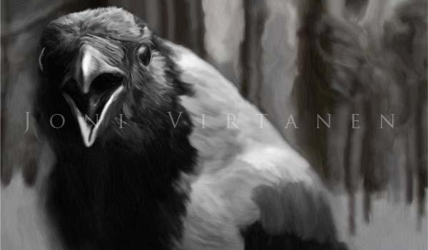 Varis - Corvus corone cornix