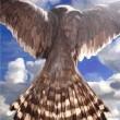 Manmade Nature - Accipiter nisus
